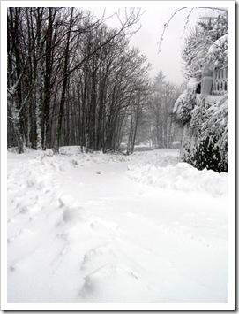 a sinistra il nostro bosco, a destra il nostro giardino, al centro la strada da cui dobbiamo scendere
