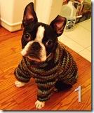 Iggy's Dog Sweater Pattern/Tutorial a crochet