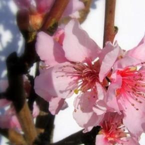 Buona primavera!