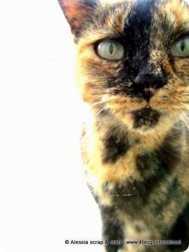 Le 100 [e+] cose che amo: gatti e micini