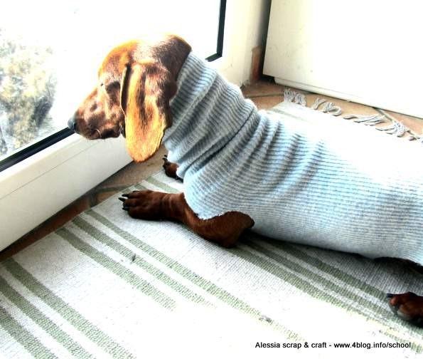 Superfreddo maglioncini per cani fai da te e senza cucire for Cucce cani fai da te