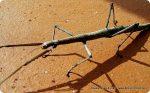 Fotografia e bambini: un insetto stecco in giardino!