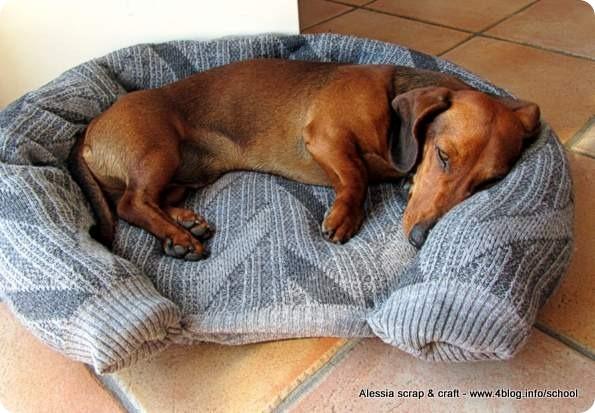 Scuola di cucito e riciclo cuccia per cani gatti fatta for Recinto cani fai da te