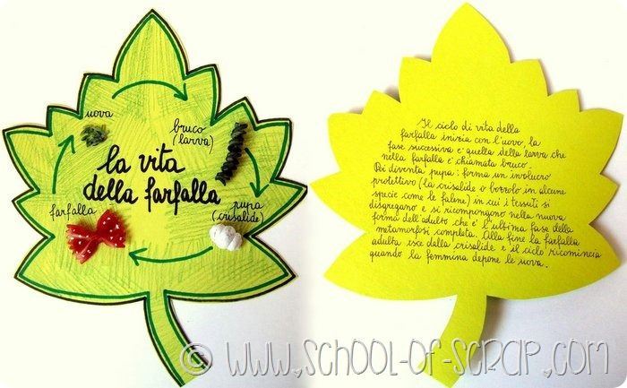 Scuola primaria: animali invertebrati il ciclo vitale della farfalla