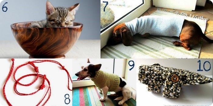 Come prendersi cura del proprio cucciolo: 10 idee fai da te per cani e gatti