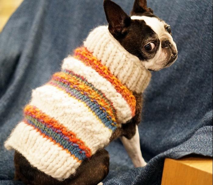Scuola di Maglia  come realizzare un cappottino per cani ai ferri ... e9a094094bd0